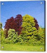 Colourful Trees Acrylic Print