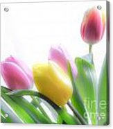 Colourful Tulips That Are Digitally Softened Acrylic Print