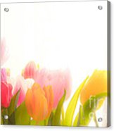 Colourful Tulips That Are Softened Digitally Acrylic Print