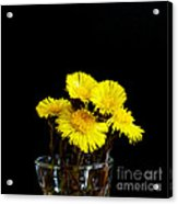 Coltsfoot Bouquet Acrylic Print