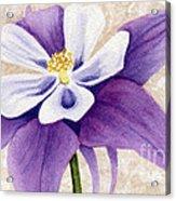 Columbine In Violet Acrylic Print by Vikki Wicks