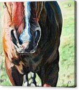 Comanche's Hello Acrylic Print