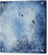 Come Fly With Me Acrylic Print