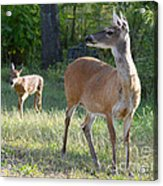 Come On My Babe Acrylic Print