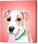 Comet A Former Shelter Sweetie Acrylic Print