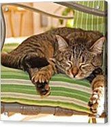 Comfy Kitty Acrylic Print