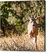 Coming Right At Me Acrylic Print