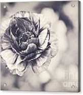 Coming Up In Black And White Acrylic Print