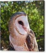 Common Barn Owl 10 Acrylic Print
