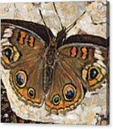 Common Buckeye Acrylic Print