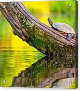 Common Map Turtle Acrylic Print