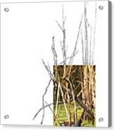 Common Moorhen Acrylic Print