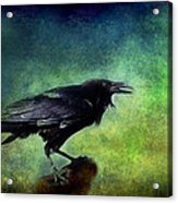 Common Raven Acrylic Print