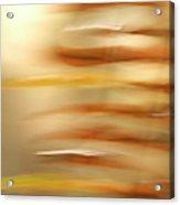 Common Sword Ferns, Polystichum Acrylic Print