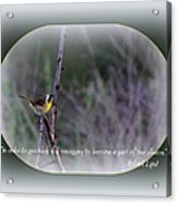 Common Yellowthroat - Bird Acrylic Print