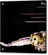 Companion To The Wind Acrylic Print