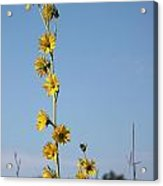 Compass Flower No. 1 Acrylic Print