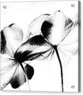 Petal Abstract Acrylic Print