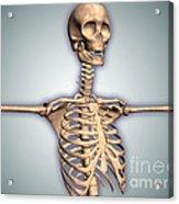 Conceptual Image Of Human Rib Cage Acrylic Print