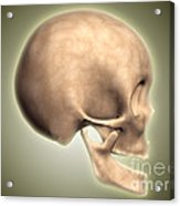 Conceptual Image Of Human Skull, Side Acrylic Print by Stocktrek Images