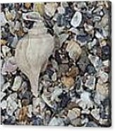 Conch Among A Sea Of Shells Acrylic Print