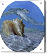 Conch And Ladyfish, 2001 Pair Acrylic Print