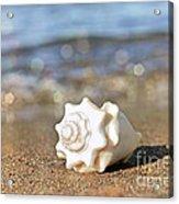 Conch Acrylic Print