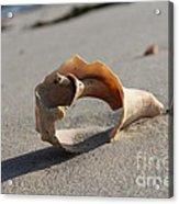 Conch On The Beach Acrylic Print