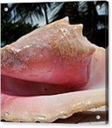 Island Conch Shell Acrylic Print