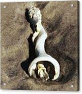Conch Shell Spiral Acrylic Print