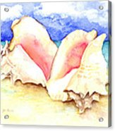 Conch Shells On Beach Acrylic Print