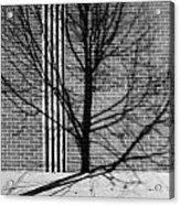 Concrete Tree II Acrylic Print