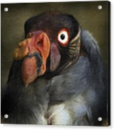 Condor 1 Acrylic Print