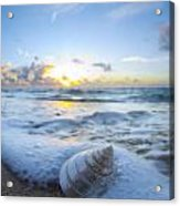 Cone Shell Foam Acrylic Print