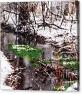 Confused Spring Or Winter Acrylic Print