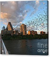 Congress Avenue Bats Acrylic Print