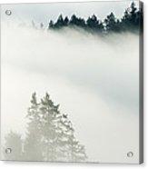 Conifa And Fog Deception Pass Washington Acrylic Print