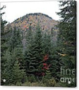 Conifer Country Acrylic Print