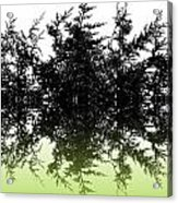 Conifer Lime Acrylic Print
