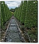Conifer Lined Water Feature Acrylic Print