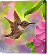 Connie's Hummingbird Acrylic Print