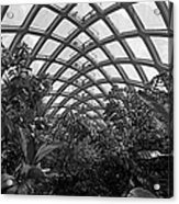 Conservatory Denver Botanic Garden Black And White  Acrylic Print