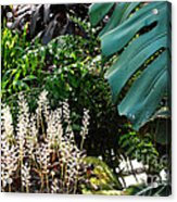 Conservatory Leaves Acrylic Print
