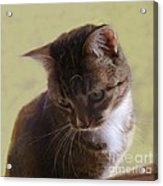 Contemplating A Pounce Acrylic Print by Diana Besser