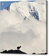 Contemplating Mont Blanc Acrylic Print