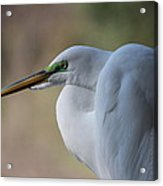 Contemplation Of Great Egret Acrylic Print