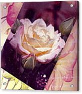 Continuation From Print To Photo Of White Rose Acrylic Print
