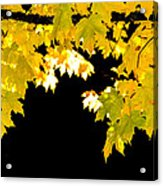 Contrast Of Autumn, Quincy California Acrylic Print
