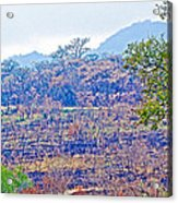 Controlled Burn Area In Kruger National Park-south Africa Acrylic Print
