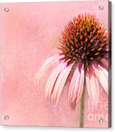 Cool And Pink Acrylic Print